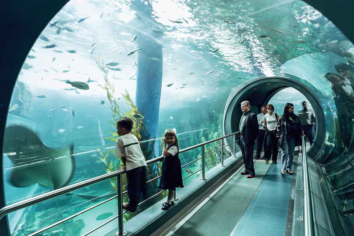 Melbourne Aquarium – Underwater Space