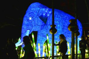 SYDNEY, AUSTRALIA - MAY 24: An Asian elephant light sculpture is displayed during a media preview of Vivid Sydney illuminated displays at Taronga Zoo on May 24, 2016 in Sydney, Australia. Vivid is lighting up at Taronga Zoo for the first time with ten giant animal sculptures representing critical species the zoo is committed to protecting. Held annually, Vivid Sydney is the world's largest festival of light, music and ideas running for 23 days. (Photo by Cameron Spencer/Getty Images)