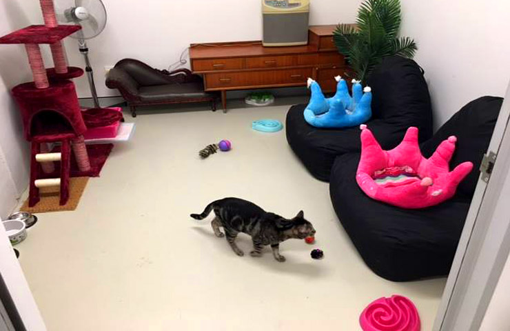 Cafe Purrfection – Eccentric Pet Cafes
