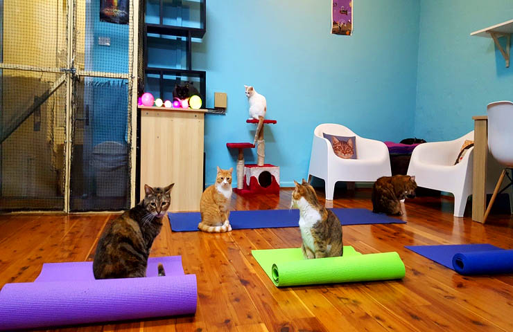 Catmosphere Cafe <br/> Quirky Pet Cafes