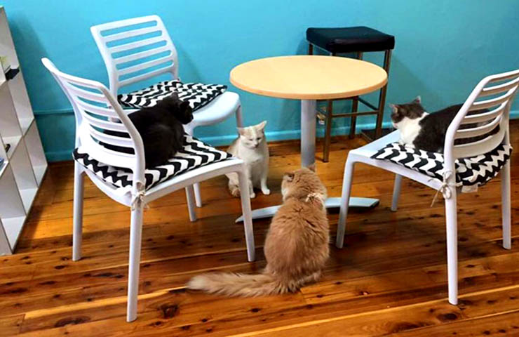 Catmosphere Cafe – Quirky Pet Cafes