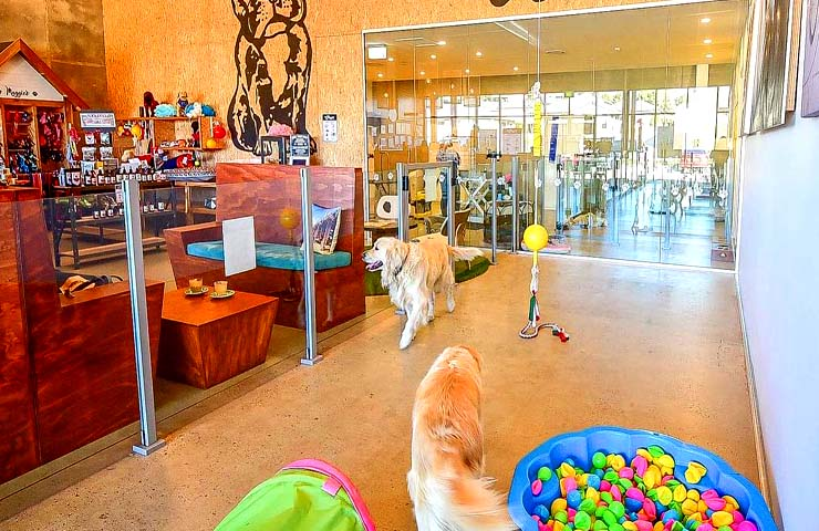 Maggie's Dog Cafe <br/> Cute Cafes