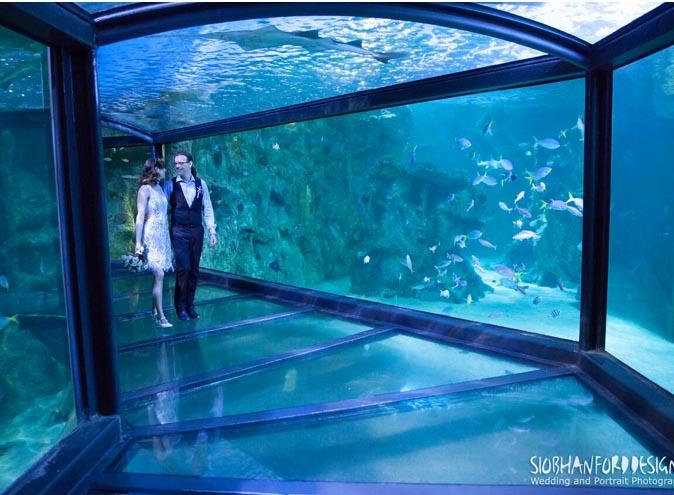 Sea Life Sydney Aquarium – Venue Hire