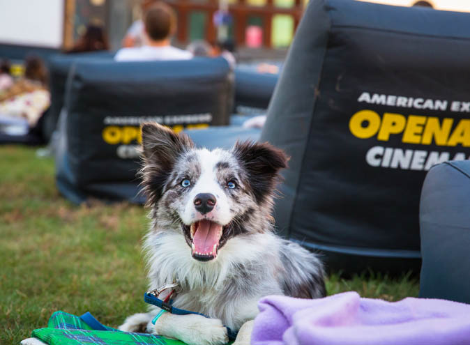 openair cinemas melbourne outdoor movies drinks eats date night hidden city secrets dogs cinema 2