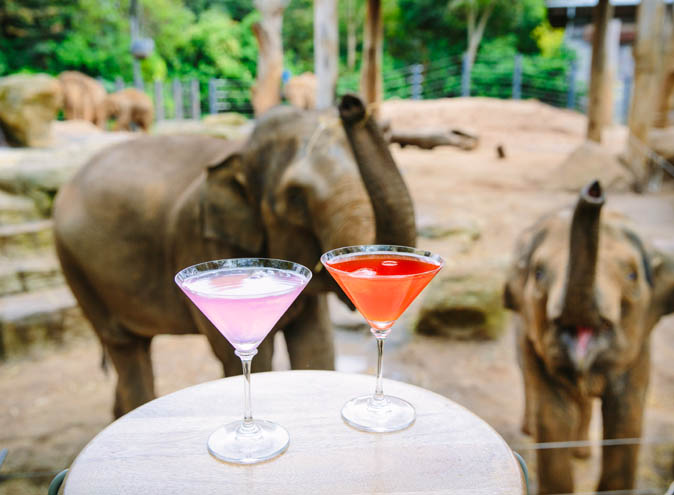 Melbourne Zoo <br/> Amazing Outdoor Venues