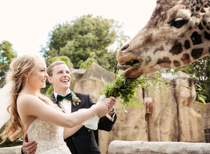 Melbourne Zoo – Amazing Venues