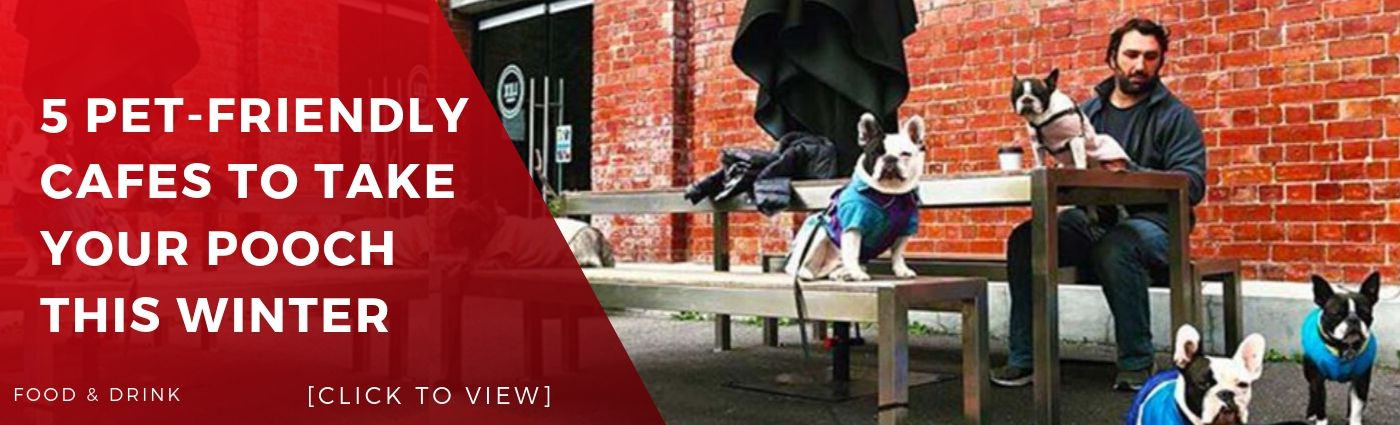dog friendly cafe melbourne banner